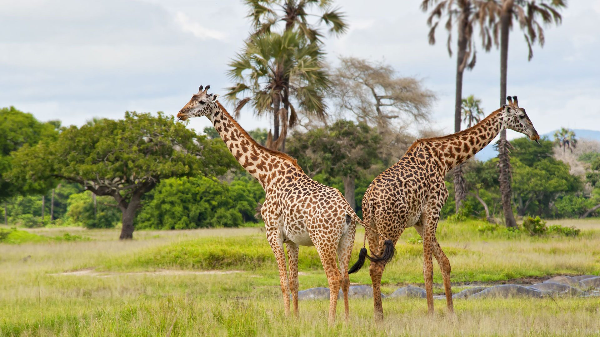 The Best Safaris in Africa Based on Your Profile